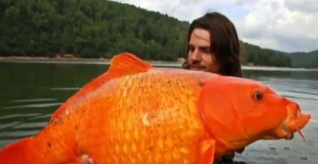 Рыбки-чудовища в озере Тахо